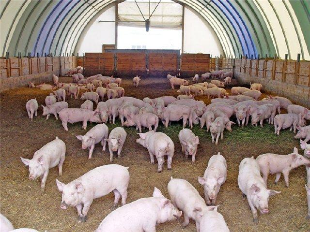 Открыть фермерское хозяйство - разводить свиней
