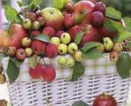 Бизнес на яблоках