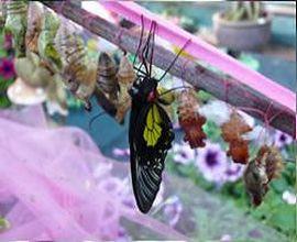 продавать бабочек