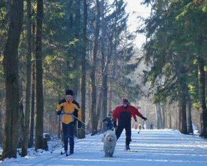 Зимний бизнес лыжные прогулки