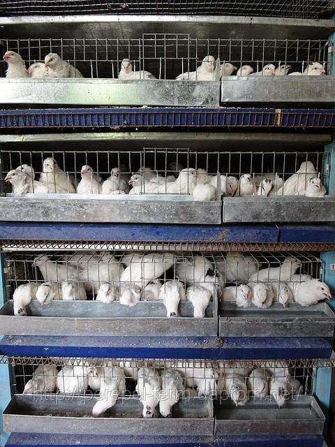 Руководство По Выращиванию Кроликов